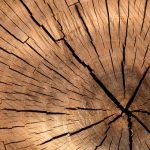 Pointers to Help You to Choose The Proper Tree Cutting Service