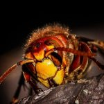 The Price Of Pest Control Services